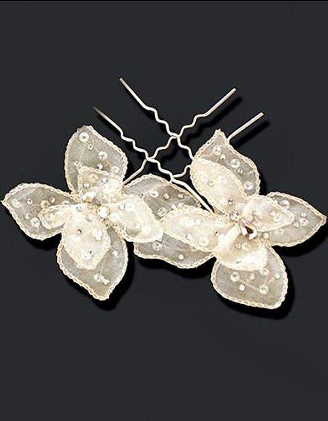 Cymbeline Papillon
