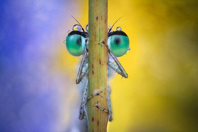Un insecte insolite