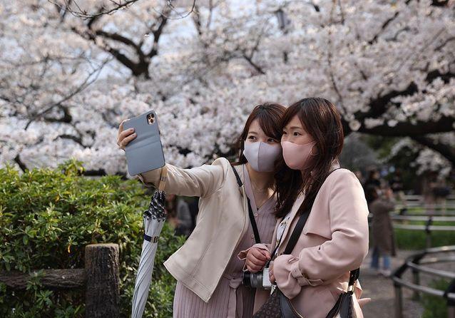 Japon : la floraison des cerisiers n'a jamais été aussi précoce