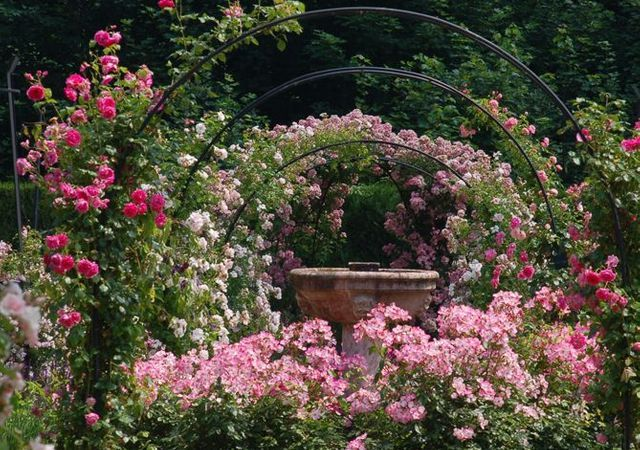 Journées de la rose à l'Abbaye de Chaalis