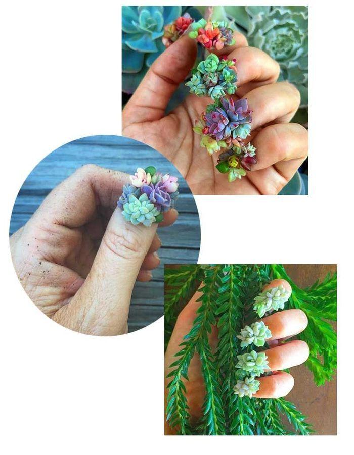 Les Succulent nails