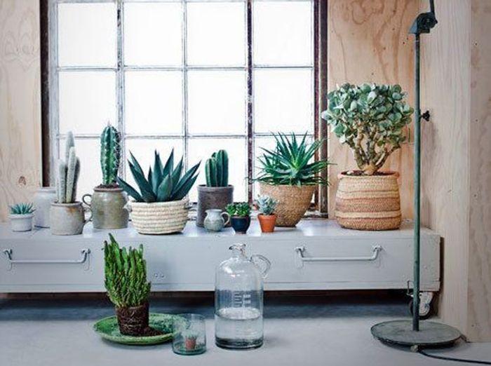Forêt tropicale avec des cactus