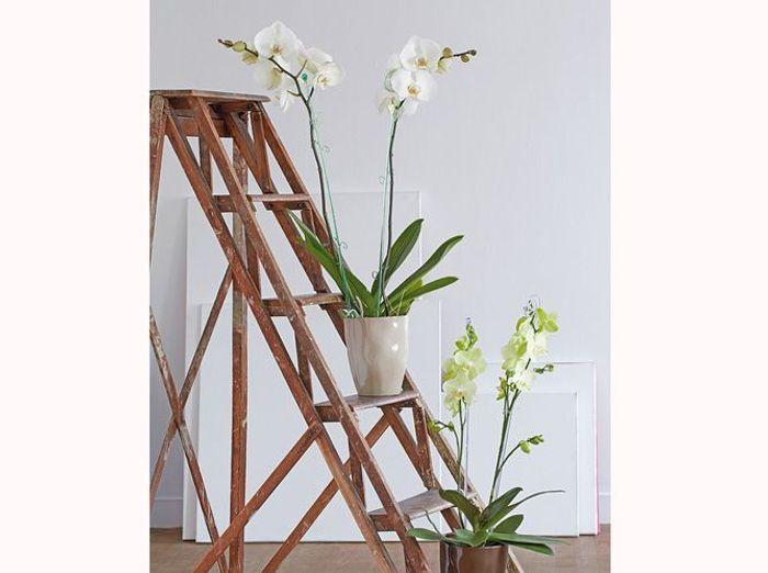 Truffaut cache pot orchidee