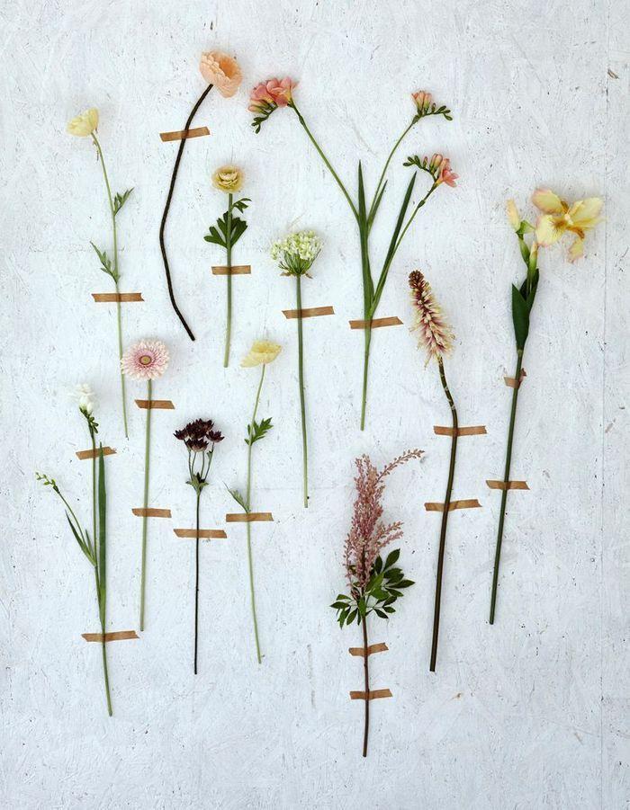 Une décoration végétale via un herbier mural