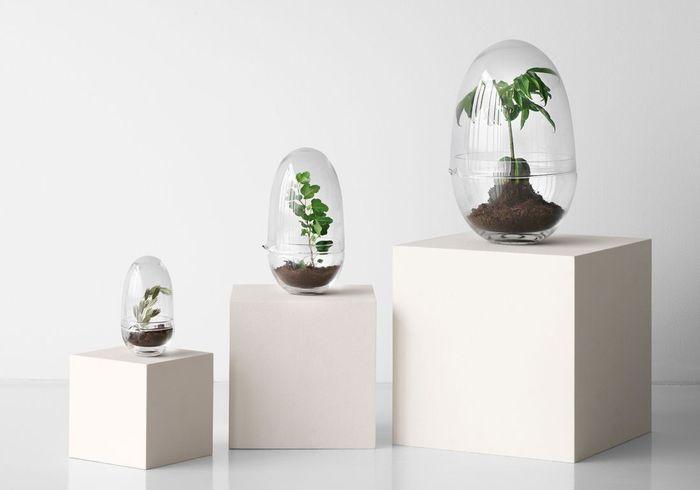Une décoration végétale via un terrarium