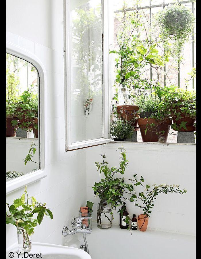 Bain de verdure 1