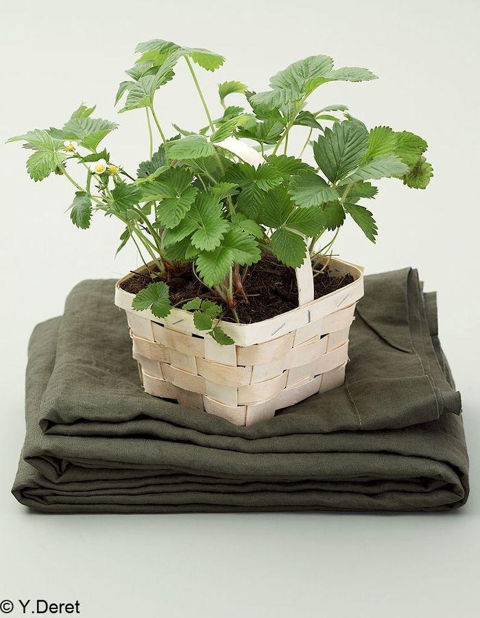 Bain de verdure 4
