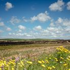 Les champs de fleur d'oranger de Takelsa
