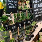 Des plantes dans des pots recyclés