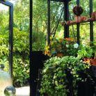 Serres à l'ancienne : de la poésie au jardin