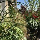 Verdure sur terrasse amenagement