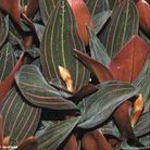 Orchidée : découvrez les différentes variétés de cette jolie fleur !