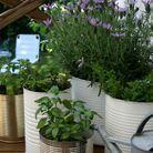 Jardin avec conserves pour un mini balcon