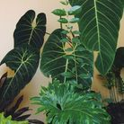 Forêt tropicale avec des plantes géantes