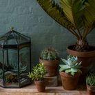 Forêt tropicale en terrarium