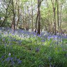 La forêt de Pashley Manor