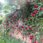 La roseraie de Pashley Manor