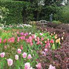 Tulipes de Pashley Manor