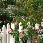 Jardin anglais avec des roses