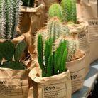 Disposer les plantes dans des sacs en papier pour créer la surprise