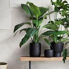Des cache-pots noirs qui font la part belle aux végétaux