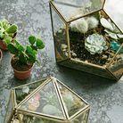 Un terrarium sur la table de chevet