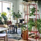 Séparer un salon avec de la végétation