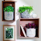 Truffaut plantes en pot