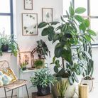 Du mini au maxi, toutes les tailles de plantes sont représentées dans ce salon