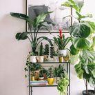 Du mobilier dédié aux plantes pour créer un jardin d'hiver