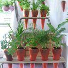 Carotte à Planter Lilas Force