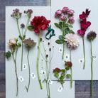 Les fleurs d'automne à acheter