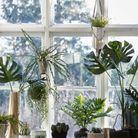Un rebord de fenêtre façon jardin d'intérieur