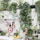 Kitchen garden 1