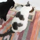 Un DIY pour réaliser une gamelle pour chien et chat