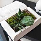 On recycle ses anciens livres pour créer un terrarium
