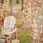 Des guirlandes lumineuses autour des troncs d'arbres