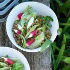 Aliment peu calorique : le radis rouge
