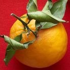Daube à l'orange et au cacao