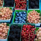 Choisir des fruits et légumes bio de saison