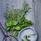 Fruits et légumes de saison mai : herbes fra?ches