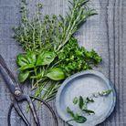 Fruits et légumes de saison mai : herbes fraîches
