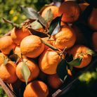 Fruits et légumes de saison en novembre : l'Orange