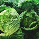 Fruits et légumes de saison en novembre : le Chou