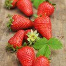 Fruits et légumes de mars : fraise gariguette