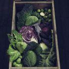 Fruits et légumes de saison en octobre : le chou vert