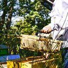 Comment vérifier la qualité du miel ?