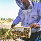 Petit lexique d'apiculture