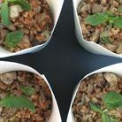 Risotto d'épeautre et champignons