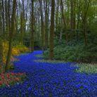 Le parc de Keukenhof, aux Pays-Bas